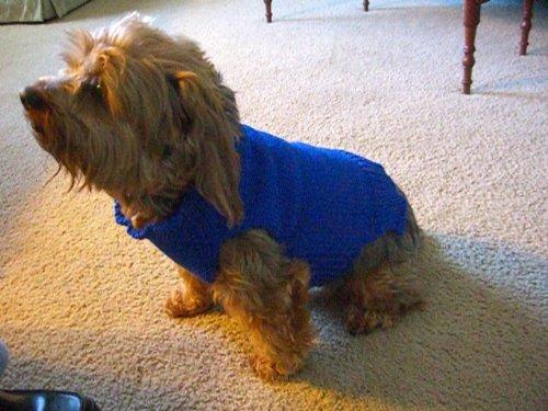 Hand Knit Small Dog Sweater (Knitting)