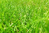 ING Wall Art Print on Canvas(32x21 inches)- Meadow Rush Grass Green Blade of Grass Grasses