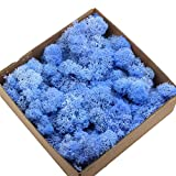 QULONG Adornos de jardín al Aire Libre 1 Caja Vida eterna Musgo seco Mini decoración de Paisaje DIY Accesorio para Manualidades con Flores - Azul Brillante