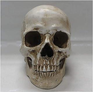 XYXZ Anatomy Models Resin Skull Heads - Realistic Resin Human Skull Model Replica - Scientific Anatomy Skull Head Bone Med...
