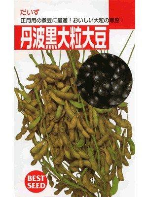 丹波黒大粒大豆  タキイ種苗の黒豆です