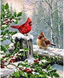 Stamped Cross Stitch Kits for Adults Beginner-Bird-DIY Designs Cross-Stitch Easy Supplies Needlework,Needlepoint Embroidery Gift for Home Decor -16x20 inch
