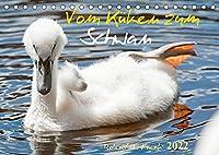 Vom Kueken zum SchwanAT-Version (Tischkalender 2022 DIN A5 quer): Die Entwicklung vom Kueken bis zum erwachsenen Schwan in 12 Bildern (Monatskalender, 14 Seiten )
