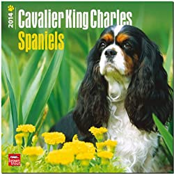 Cavalier King Charles Spaniels 2014 18 Month Calendar[Browntrout Publishers][Amazon]