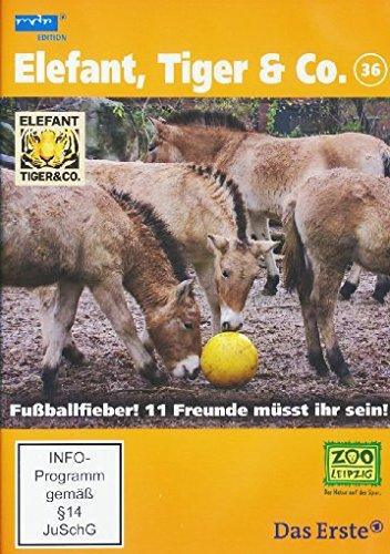 Elefant, Tiger & Co. - Teil 36: Fußballfieber! 11 Freunde müsst ihr sein! [2 DVDs]