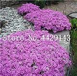 Generic Fresh 100 piezas de semillas de flores ROCK CRESS para plantar Rosa claro 1