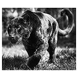 Cuadros Diamantes 5D - Animal Pantera Negra Diy Diamante Pintura - 5D Cuadrado Completo Bordado Redondo Kits De Punto De Cruz - Mosaico Diamante De Imitación Artesanía Para El Hogar Decoración Mo