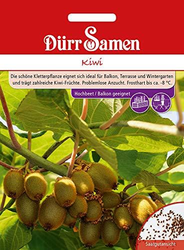 Dürr Samen 4379 Kiwi (Kiwisamen)