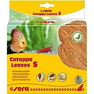 sera-Catappa-Leaves-Seemandelbaumbltter-verschiedene-Gren-frdern-die-Laichbereitschaft-von-Fischen-Garnelen-sie-beugen-bakteriellen-Infektionen-Verpilzungen-vor-Garnelenfutter-Krebsfutter