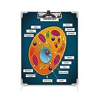 クリップボード A4 教育 かわいい画板 科学 A4 タテ型 クリップファイル ワードパッド ファイルバインダー 携帯便利動物のセルカラフルなディスプレイ医学研究装飾的な核 多色