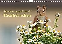 Besondere Augenblicke mit Eichhoernchen (Wandkalender 2022 DIN A4 quer): Zauberhafte Bilder von kleinen Fotostars (Monatskalender, 14 Seiten )