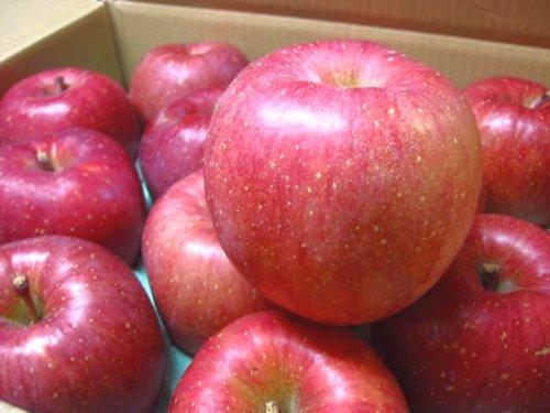 ご予約 訳あり ご家庭用 山形産 サンふじ りんご 色薄 キズ 大小不揃い 10kg