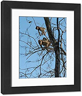 Framed 17x13 Print of Black howler Monkey (Alouatta caraya) (19924735)