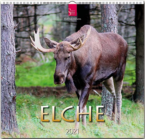 Elche: Orginal Stürtz-Kalender 2021 - Mittelformat-Kalender 33 x 31 cm