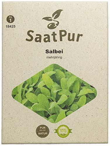 SaatPur Salbei Samen, Saatgut für ca. 80 Pflanzen