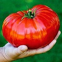 FastDirect Semillas de Tomates Gigantes Rojos 10 PCS Semillas de Verduras Raras Ecologicas para Jardin, Huerto, Patio