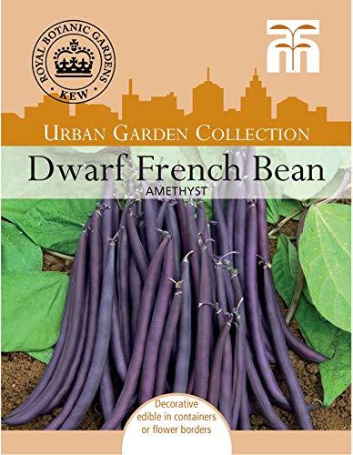 Thompson & ‿Morgan Kew Urban Vegetables Graines de haricots améthyste nain 70