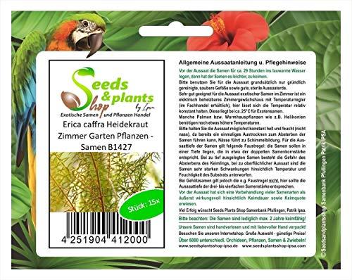 Stk - 15x Erica caffra Heidekraut Zimmer Garten Pflanzen - Samen B1427 - Seeds Plants Shop Samenbank Pfullingen Patrik Ipsa