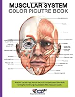 Muscular System Color Picture Book: Beautiful Illustrations With Concisely and Clearly Readable Labels