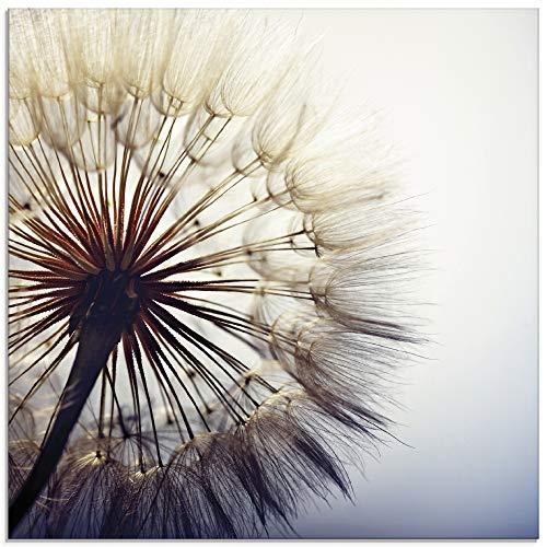 Artland Glasbilder Wandbild Glas Bild einteilig 50x50 cm Quadratisch Natur Botanik Blumen Pusteblume Blüten Frühling Modern T4RE