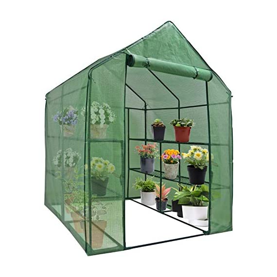 """Mini Walk-in Greenhouse Indoor Outdoor -2 Tier 8 Shelves- Portable Plant Gardening Greenhouse (57L x 57W x 77H Inches… 1 【Strong Construction】This mini walk-in greenhouse is built with high quality metal frame with powder coating, durable bearing net on each layer is strong enough to hold more seed trays, pots and plants growth. The clear waterproof PE cover protects plants from frost or pests while allowing nourishing sunlight to pass through. 【Indoor Outdoor Greenhouse】Waterproof and UV protection, ideal growing environment , can be used indoor and outdoor at all seasons. Perfect for protecting young plants or extending the plant growing season. 【Portable & Easy Setup】Overall Dimensions: 57""""L x 57""""W x 77""""H, Perfect Size for Easy Moving to Indoor or Outdoors. Easy to assemble, no tools required. Enjoying a lot of fun of the flowers and plants in your leisure time!"""