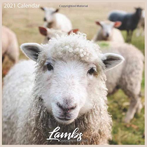 Lambs 2021 Calendar: Official Sheeps 2021 Wall Calendar 18 months