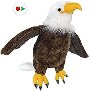Teddy Mountain NY American Eagle (8