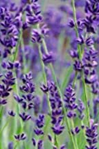Wild Lavender - Blank Notebook: 101 Pages, 6 x 9 Journal, Soft Cover