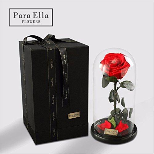 La Belle Et La Bête Rose, Vivre Toujours Rose En Verre, Rose Enchanted Enchantée, Rose Sauvage% 100 Naturel