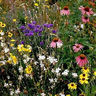 Outsidepride Southeast Wildflower Seed Mix - 5 LB