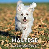 Maltese: 2021 Wall Calendar, Cute Gift Idea For Maltese Lovers Or Owners Men And Women
