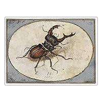 クワガタムシアンティークポスターAlbrecht Durer昆虫壁アートパネル有名な水彩絵画インテリアクラシックキャンバス写真ヴィンテージプリントリビング ルーム寝室部屋モダン装飾画30x40cmいいえフレーム