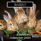 Rabbit Calendar 2021