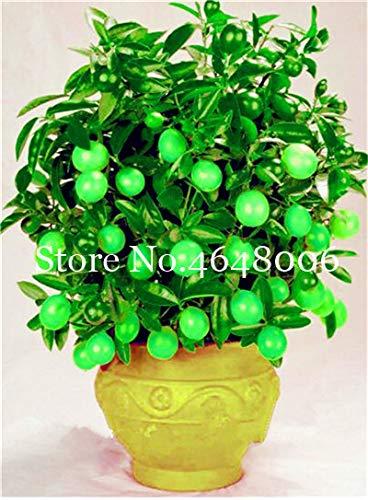 Bloom Green Co. 20 Pcs citron Bonsai Nouveau DrawF Arbre de fruits bio pour jardin Fournitures Easy Grow Exotique Citrus Bonsai Arbre en pot frais Plante: 7