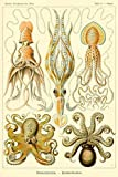 Haeckel Squid Octopus Marine Biology: Cephalopod Science Illustration Notebook - Lined 120 Pages 6x9 Journal