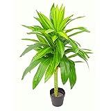 Extra Large Artificiel Evergreen Ficus Plant en Plastique Noir Pot 95cm Umbrella Tree Vert Fonc/é