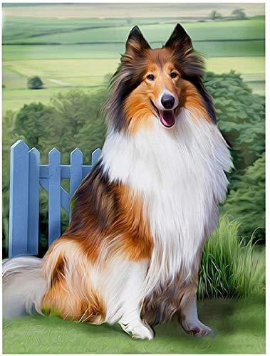 PPTRTYQ DIY Ölgemälde Malen nach Zahlen Erwachsene Kinder, Hübscher Collie-Hund Spielzeug malen Handgemalte Geschenke Zahlenmalerei ab 5 Öl Wandkunst