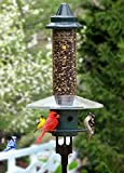 Brome Squirrel Buster Plus Squirrel Proof Bird Feeder with Pole and...