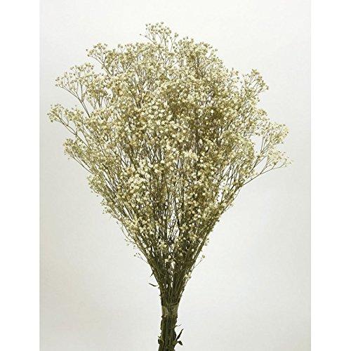 Almaflor Ramo paniculata preservada. Color Natural. Envio Prime. Peso 100 Gramos, Altura 60 cm. Hecho en España.