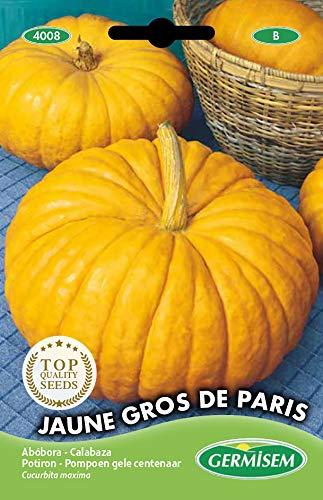 Germisem Jaune Gros de Paris Semillas de Calabaza 3 g, EC4008