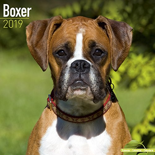 Boxer Calendar 2019