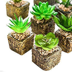 YWXKA Artificial Succulents, 5PCS Fake Succulents Potted Imitation Cactus, Small Plants and Pots for Home Office Decoration