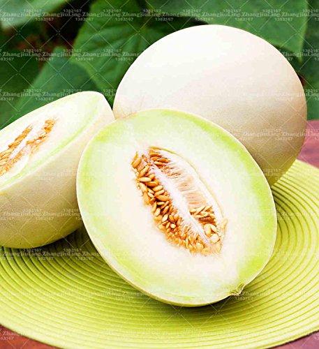 20pcs Cantaloup Melon Graines Blanc et doux Hami Melon jaune Graines de fruits Graines de melon cantaloup plantes Jumbo pour le jardin à la maison 2