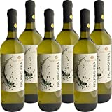 Falanghina del Beneventano IGP | Torre dei Chiusi | Confezione da 6 Bottiglie da 75Cl | I ...
