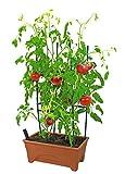 Emsco Group 2375 Start Pickin' Raised Bed Grow Box and Seed Starter, Terracotta