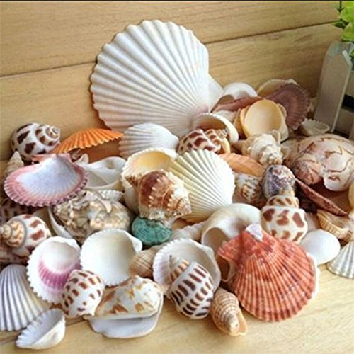 Gemini_mall, conchiglie di mare e spiaggia, conchiglie naturali miste, per decorazione lavori artigianali, matrimoni, giardini, acquario, 100 g, colore e motivo casuali Mixed