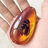 Filato in ambra Fossil con insetti in campione di pietre di campione ovale. Ciondolo da collezione decorativo principale, idea regalo (modello casuale)