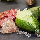 フィンガーライム グリーン&ピンク9cmポット苗(挿し木苗)/2個セット【果樹 二年生挿し木苗/即出荷】フィンガーライムはオーストラリア原産の柑橘類で、 長さ4~8cmの円筒形、重さは10~20g、ライムのような酸味があり粒状の果肉とその食感から「キャビア・ライム」とも呼ばれています。オーストラリアやアメリカでは「フルーツキャビア」の愛称でも呼ばれている高級食材ですが供給が追い付いていません。日本ではまだあまり知られていない柑橘果樹です!!【自社農場から新鮮苗直送!!】【即出荷】