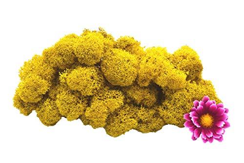 Muwse Island-moos V 50g Ananas-gelb händisch vor-gereinig präpariert gefärb weich haltbar. Deko-moos Floristik-moos Bastel-moos Modellbau-moos Rentier-moos Iceland-Moss