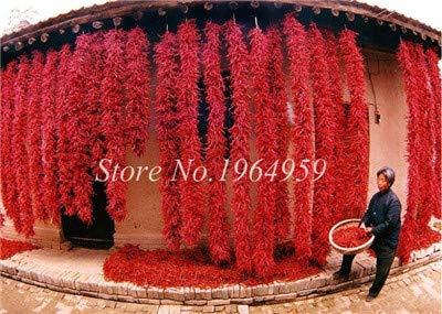 Pinkdose 100 Teile/beutel Chilly Red Hot Peter Pfeffer Chilly Bonsai Neuheit Lustige Paprika Bonsai Pflanzen Gemüse Für Zuhause & amp; Garten: 4